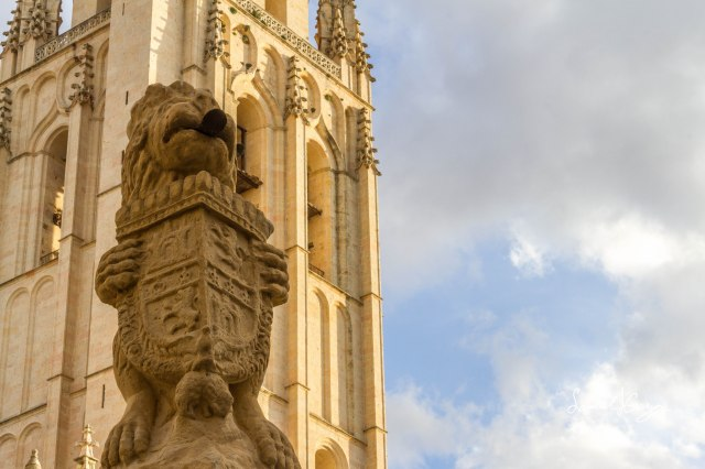 One of the many lion statues guarding the gate of the cathedral.