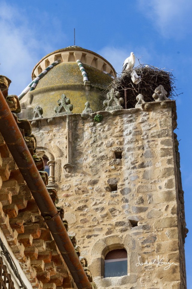 Famous storks of Extremadura.